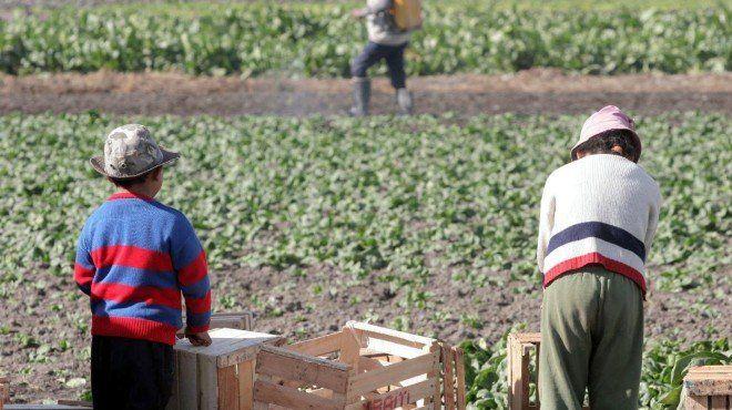La primera condena del país por trabajo infantil se dictó en Santa Fe