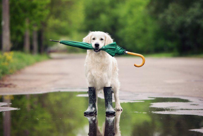 ¿Fin de semana con lluvia?