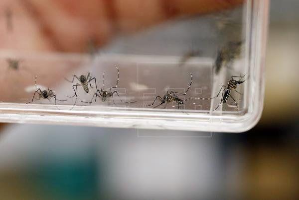 Honduras declaró la emergencia nacional por una epidemia de dengue