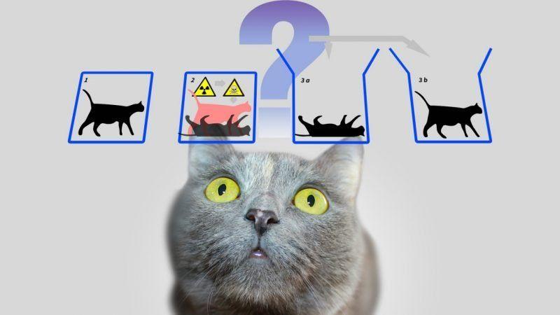 """¿Podrían haber """"resuelto"""" la paradoja del Gato de Schrödinger, el desafío más grande de la física cuántica?"""