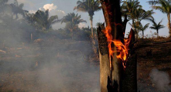 El Banco de Desarrollo donará medio millón de dólares por los incendios en el Amazonas