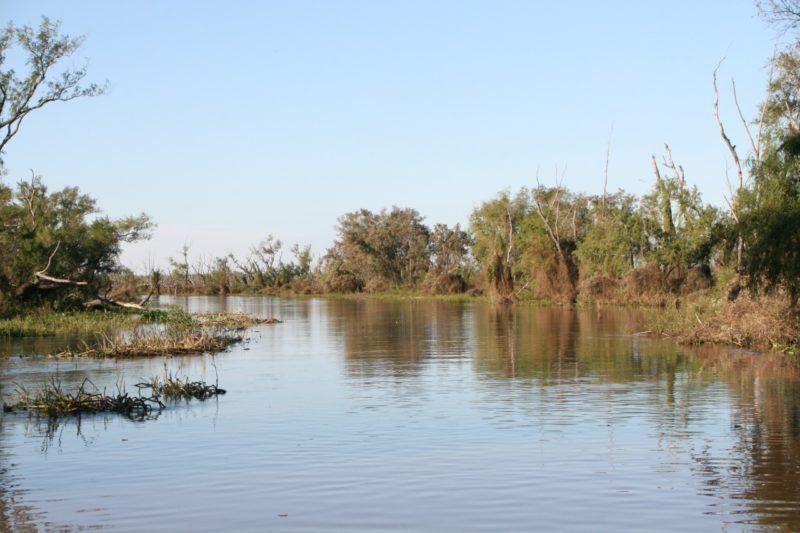 El plan de manejo del sitio Ramsar Delta del Paraná propone jerarquizar el cuidado de los humedales