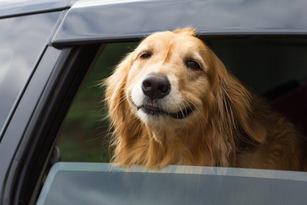 Dejaron a su perro solo dentro del auto y provocó un desastre
