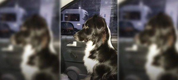 Maestras le hicieron un boletín a una perra que va todos los días a la escuela