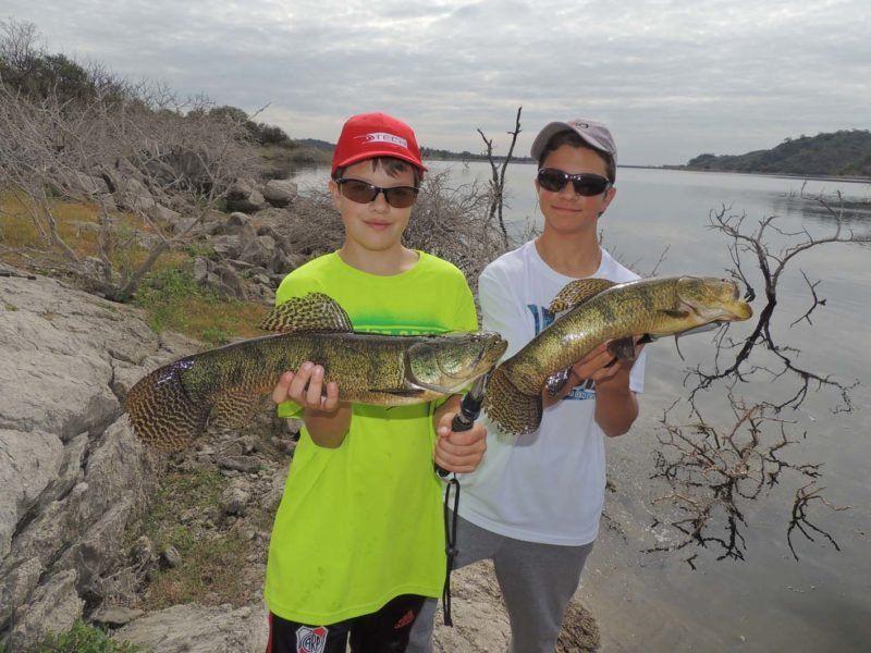 Pesca tarariras