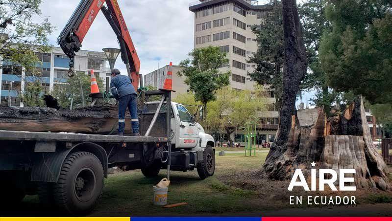 Un árbol emblemático de Quito que fue quemado y ahora se transformó en un símbolo de la paz