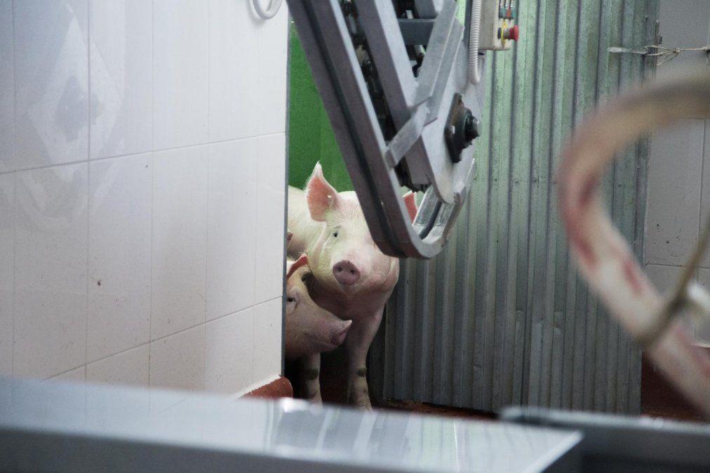 El futuro es veggie: cuatro millones de argentinos ya son veganos, mientras cae el consumo de carne