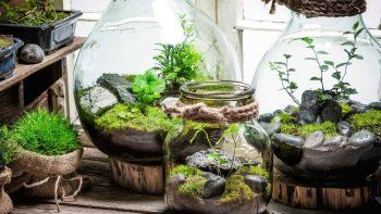 Cómo hacer un terrario eterno para tener en casa