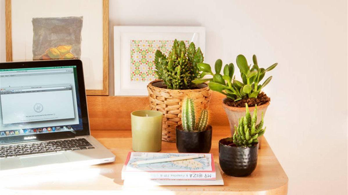 7 beneficios de tener flores en el hogar y en el trabajo