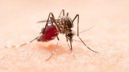 preocupa la importacion de dengue al pais tras el exodo de hinchas de colon