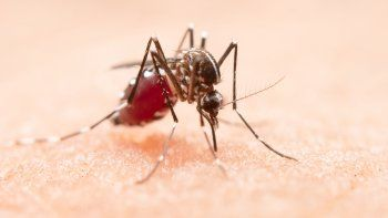 Preocupa la posible importación de dengue al país tras el éxodo de hinchas de Colón a Paraguay