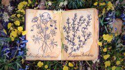 floriografia: el lenguaje secreto de las flores