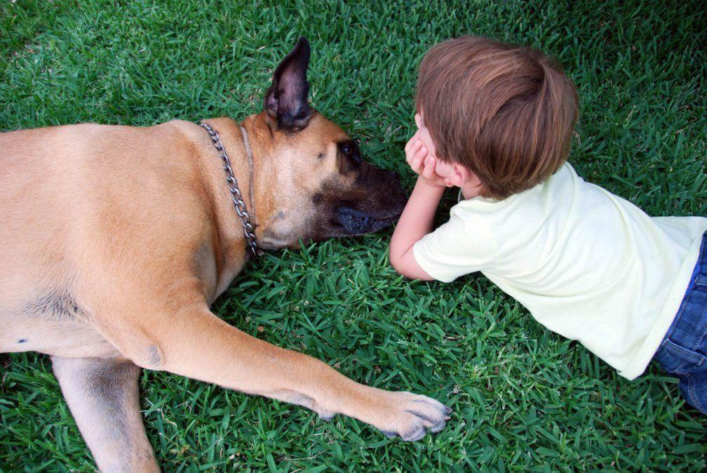 8 películas sobre perros que te harán amar aún más a tu mascota