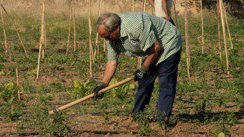 La agricultura familiar toma fuerza y quiere marcarle la agenda al próximo gobernador