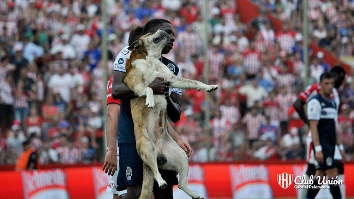 """Falleció """"Robertito"""", el perro que jugó para Unión por unos minutos - Aire de Santa Fe - La Gran Radio"""
