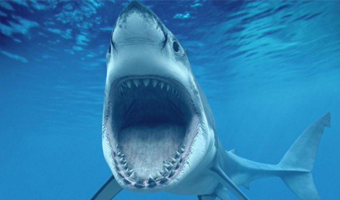 VIDEO: Un tiburón blanco lucha por devorar a un pez gigante a pocos metros de una embarcación