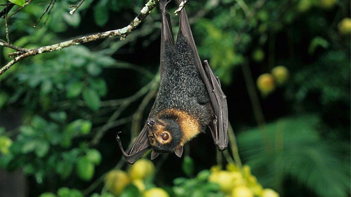 Los murciélagos acostumbran discutir tanto como los humanos, según científicos