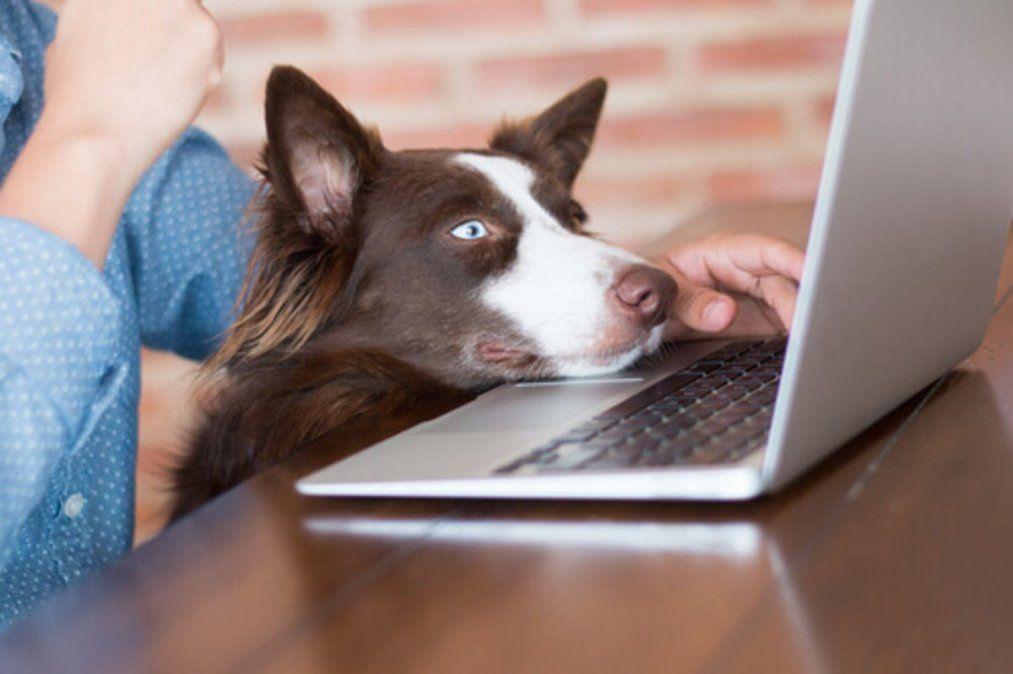 Tener perros o gatos en el trabajo reduce el estrés y aumenta la productividad
