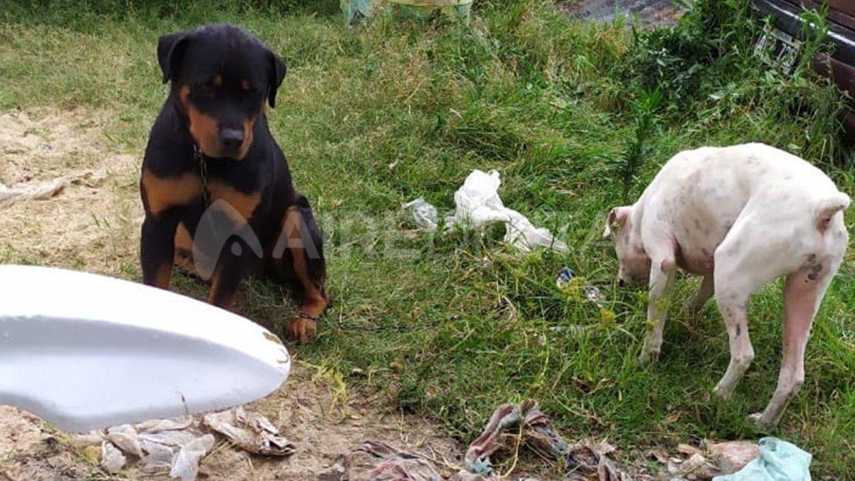 Parte de los canes que fueron depositados en un predio.
