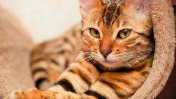 un gato habla con un perfecto acento sureno de ee.uu. y los usuarios no pueden parar de verlo