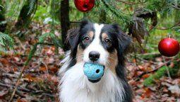 video viral: la perra que ayuda a su duena a decorar el arbolito navideno