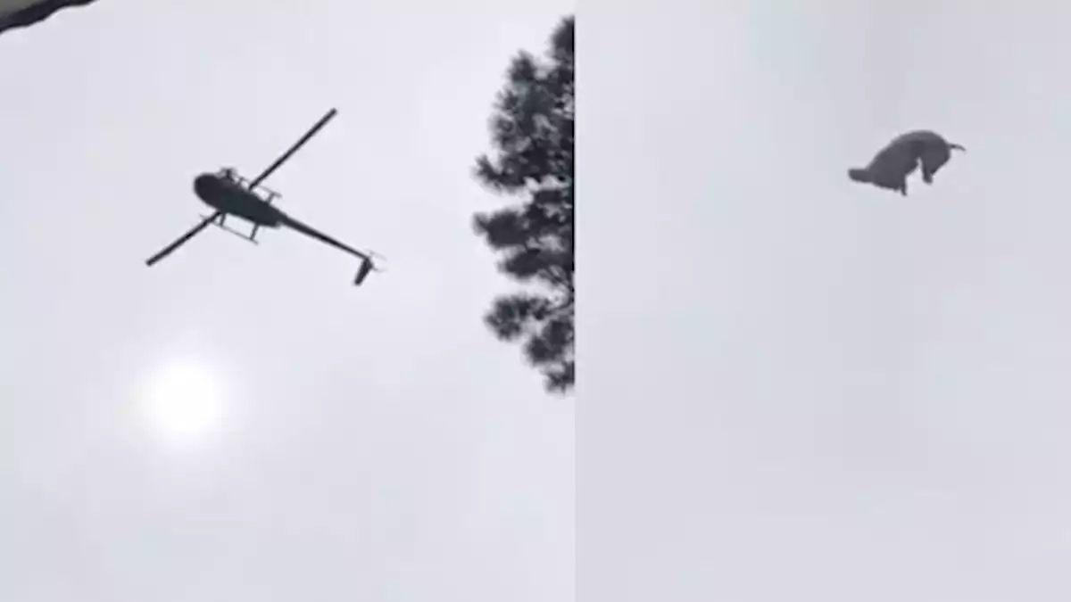 Un reconocido empresario del mundo de la moda arrojó un cerdo desde un helicóptero a una pileta