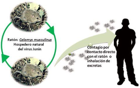 Fuente: Organización Panamericana de la Salud (OPS)