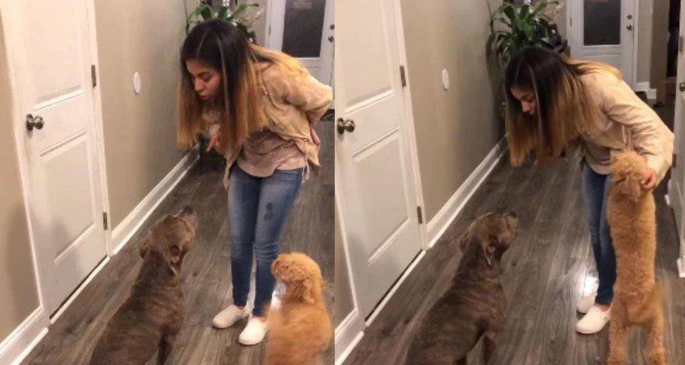 Retó a su perro por escaparse de su casa y para pedirle perdón la abrazó
