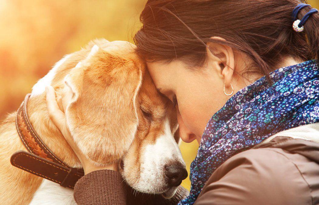 Consejos para las mascotas: cómo cuidar a perros y gatos durante la cuarentena