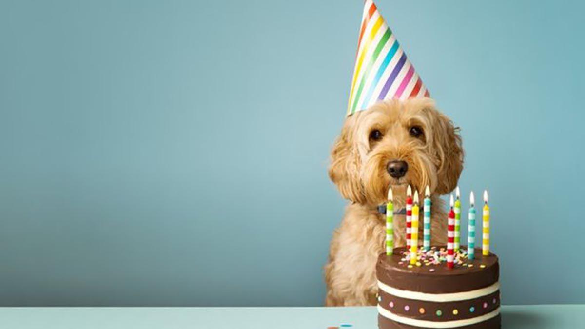 Cómo calcular la edad humana de tu perro (y por qué la regla de los 7 años no funciona)