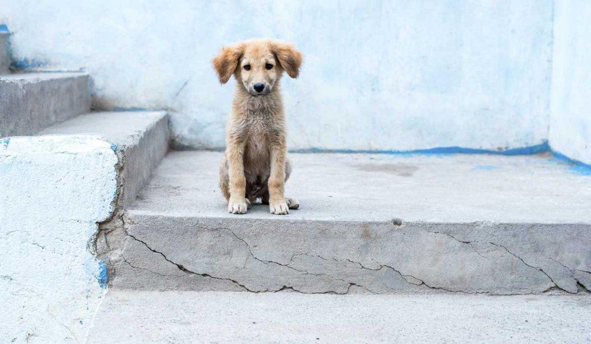 Escucharon aullidos y rescataron a un perro que había sido enterrado vivo en Misiones