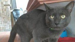 viral: el gato con doble vida que tenia dos casas, dos nombres y dos duenos