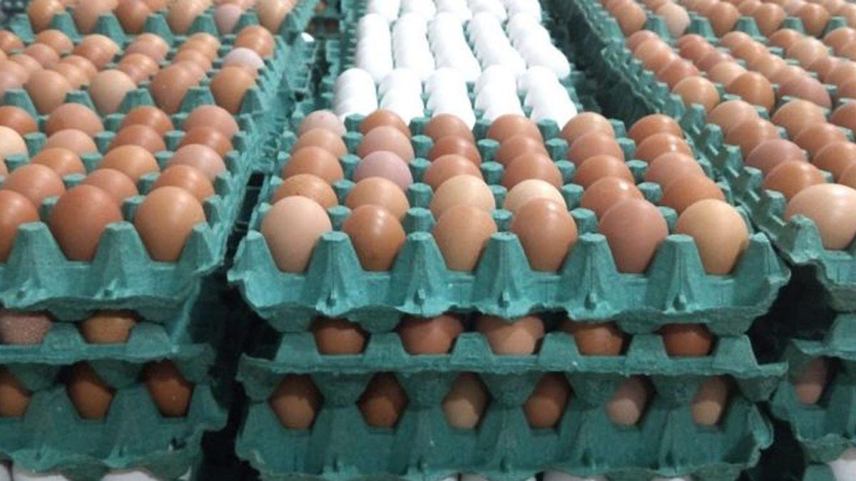 En 2019 hubo que poner mucho más huevo: Hubo récord de producción y el consumo de ese alimento creció 5%