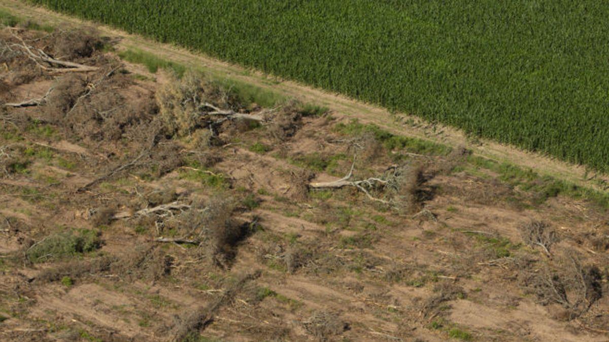 En el norte se desmontaron otras 81 mil hectáreas el año pasado, denunció Greenpeace