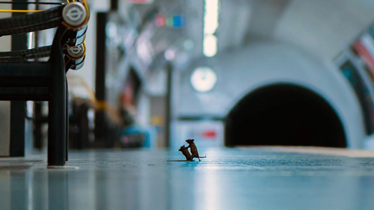 El fotógrafoSam Rowleyestuvo una semana tratando de fotografiar a losratonesque se ven en el sistema de subtes deLondres.