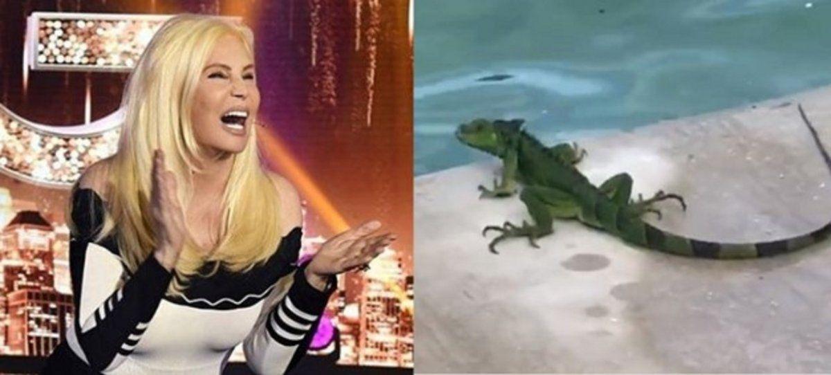 Video: el simpático encuentro entre Susana Giménez y una lagartija