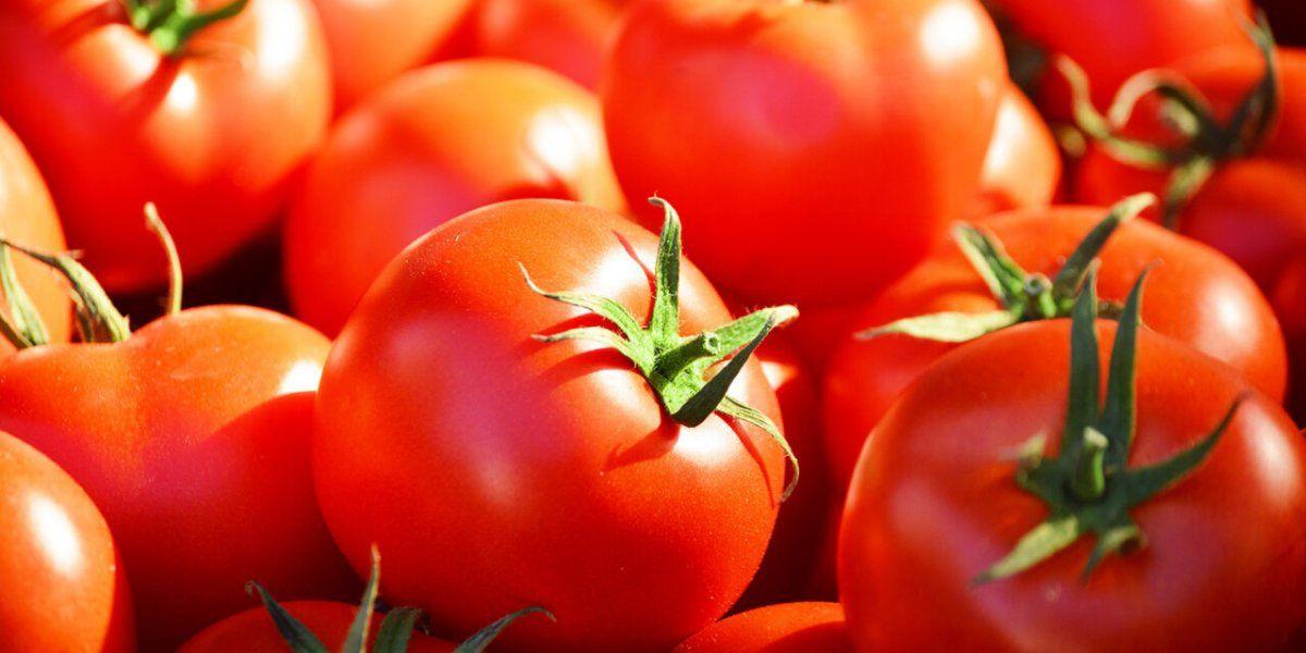 ¿Cómo distinguir un tomate ecológico de uno transgénico?