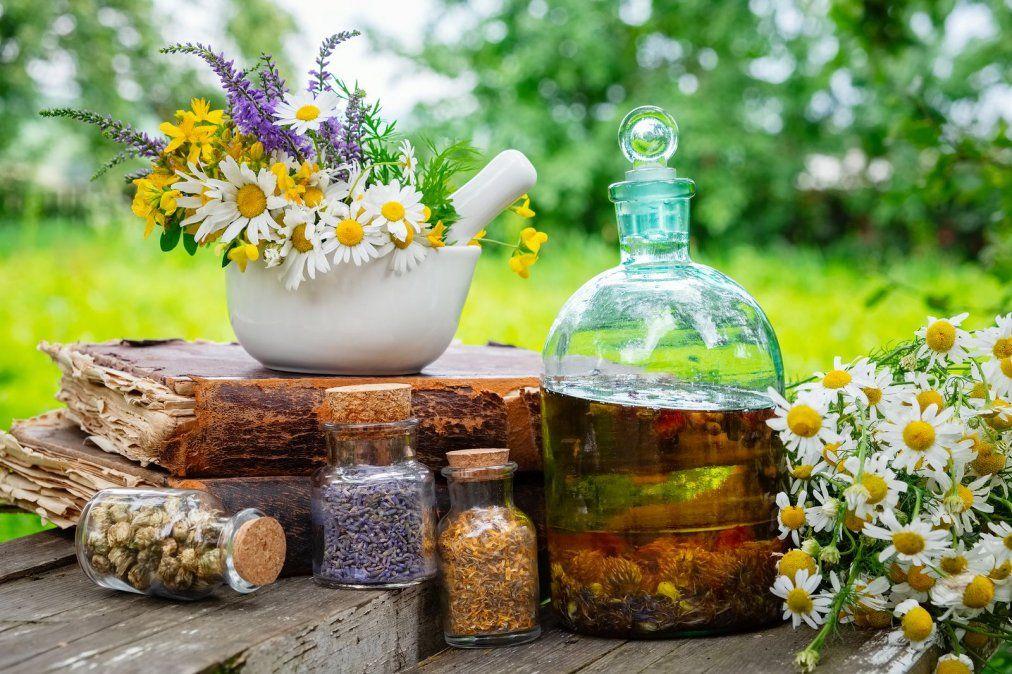 Plantas medicinales para tratar el dolor de estómago.