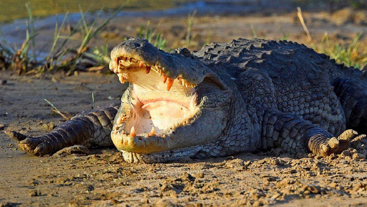 Video: así atacó un cocodrilo a una mujer que lavaba la ropa en el río