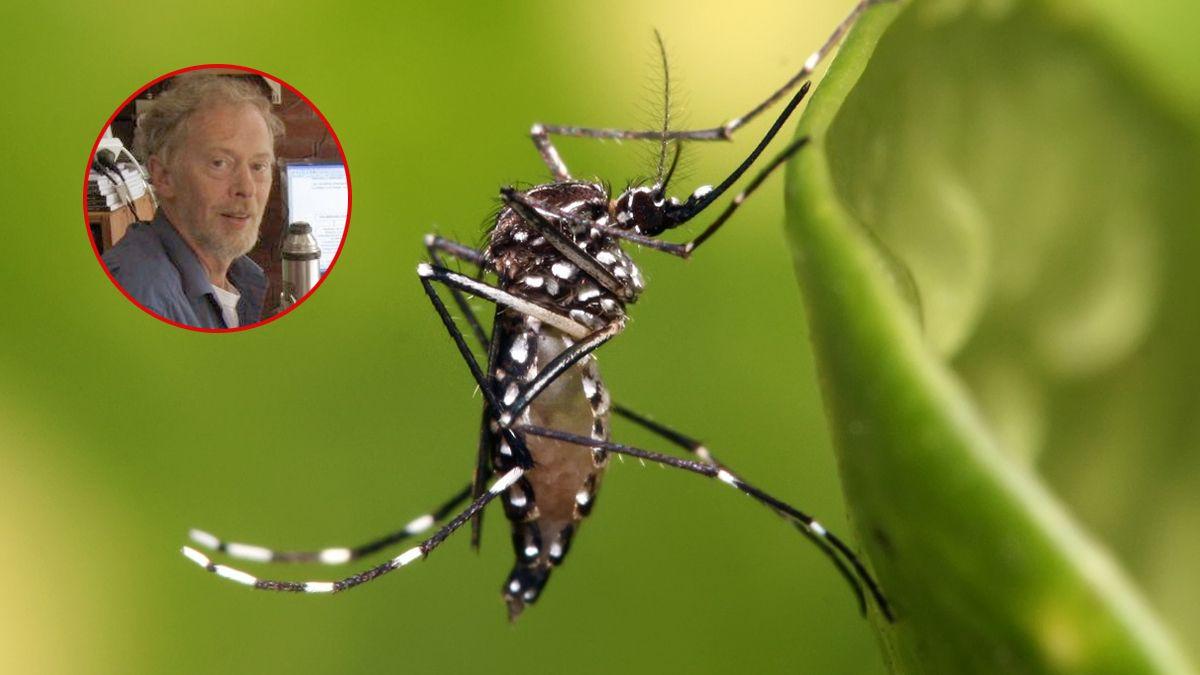 El mosquito del dengue bajo la lupa de un experto que derriba todos los mitos