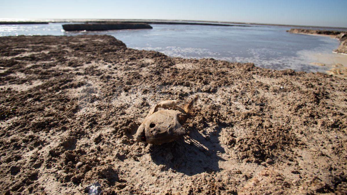 El esqueleto de un pescado en el lecho de la laguna.
