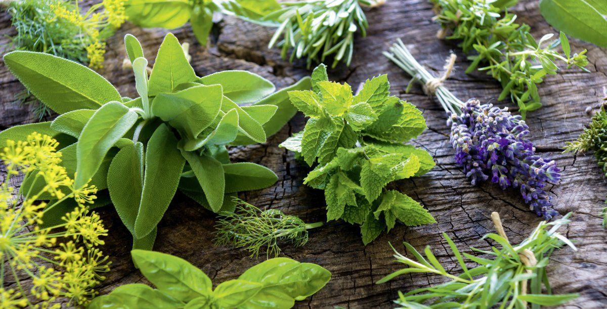 Plantas aromáticas para cocinar y cultivar en la huerta de casa.