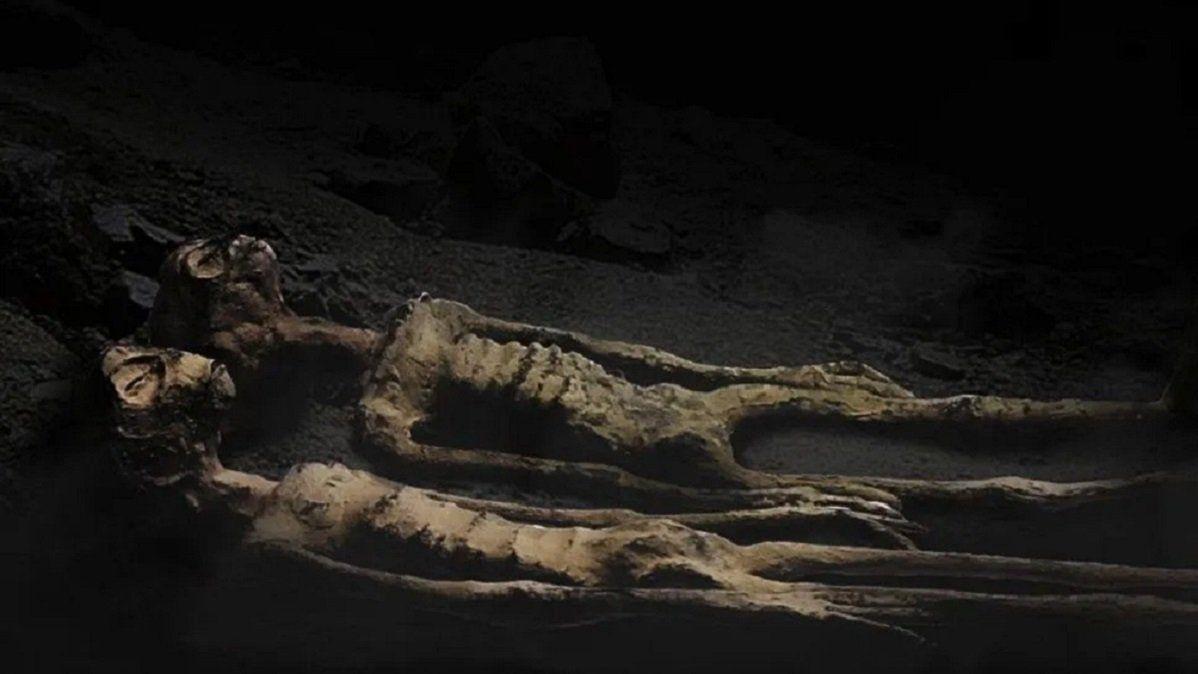 Los restos podrían ser claves en la investigación científica