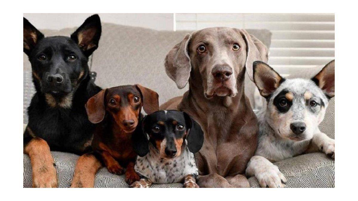 Día del Perro en Argentina: por qué se homenajea hoy al mejor amigo del hombre    Perro