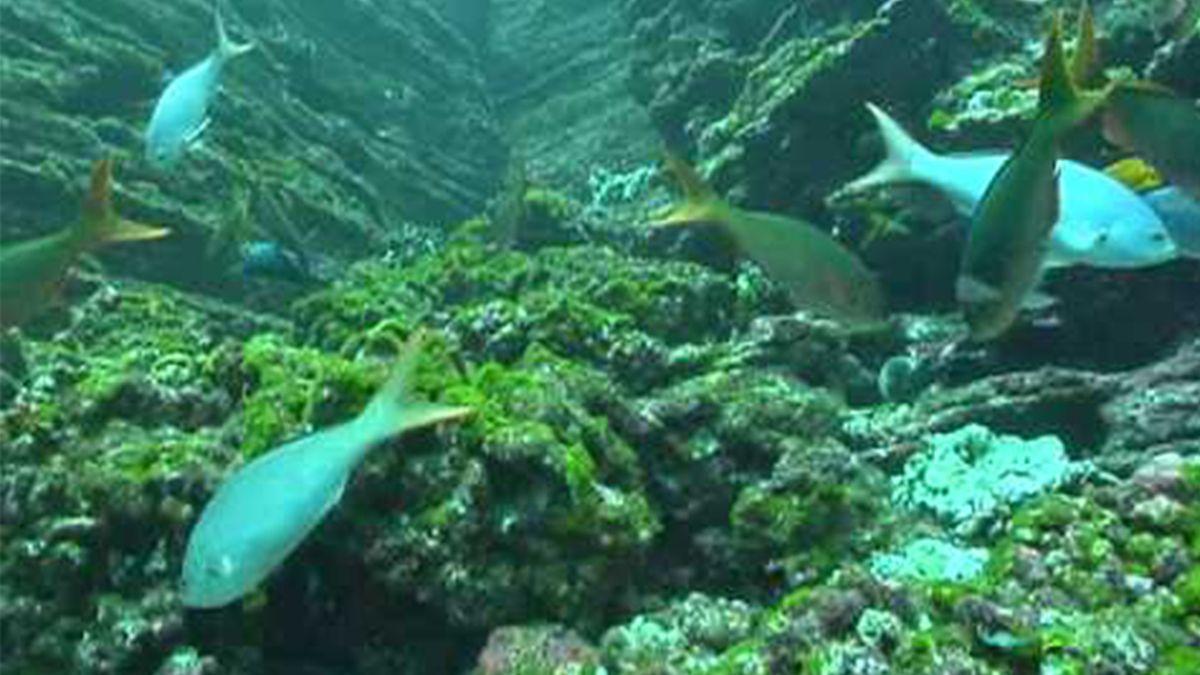 La National Geographic premió un programa argentino para detectar fauna marina muerta a través de una App