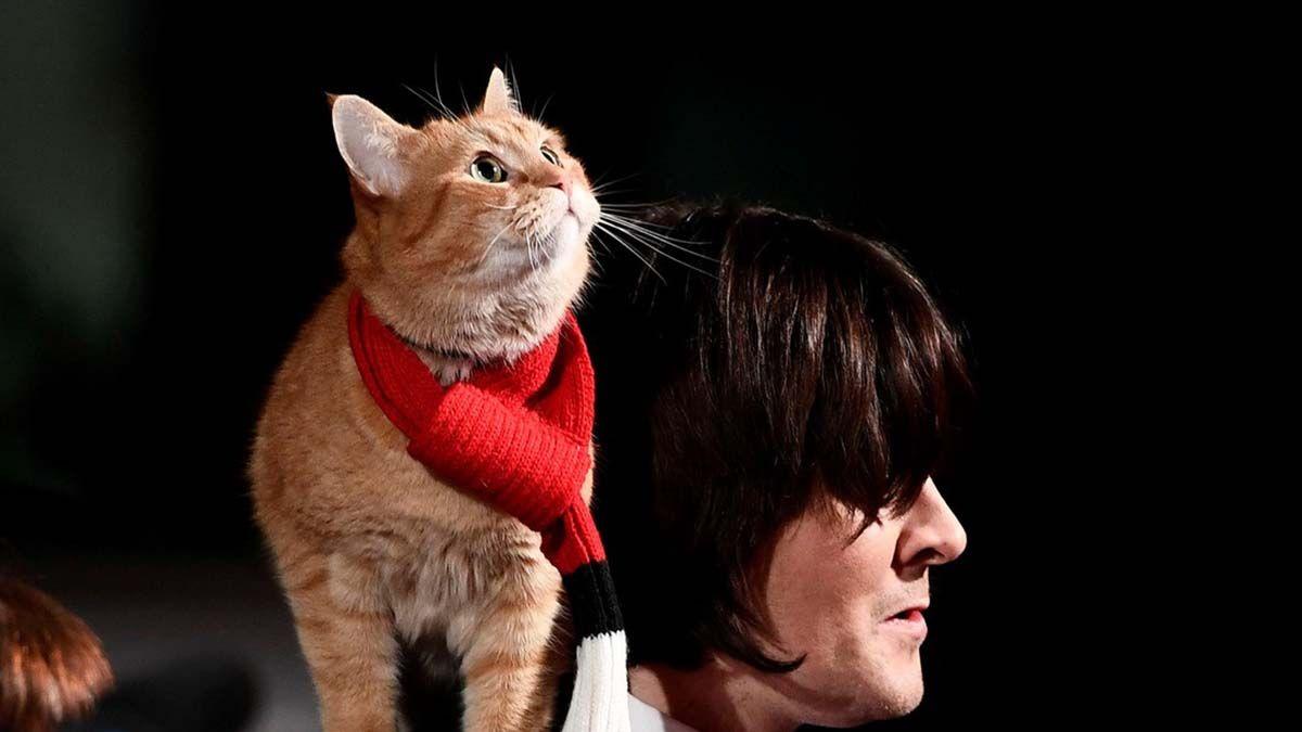 El gato Bob y su dueño