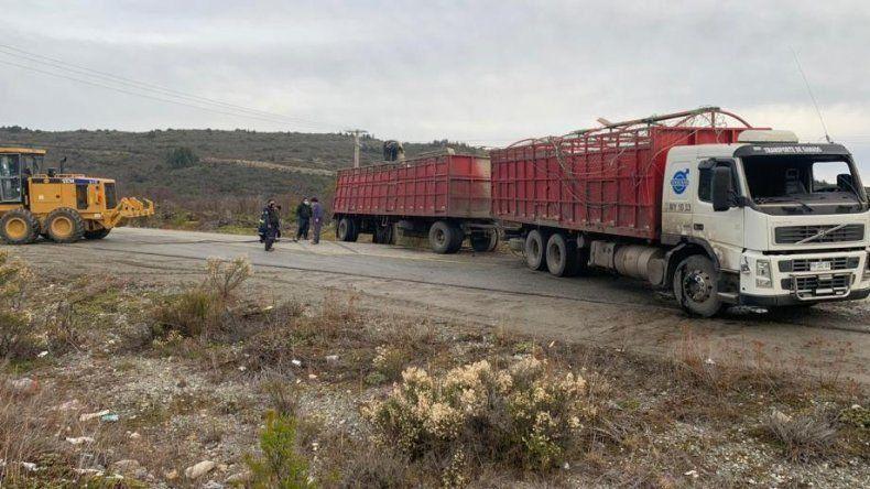 Camión transporte de terneros.