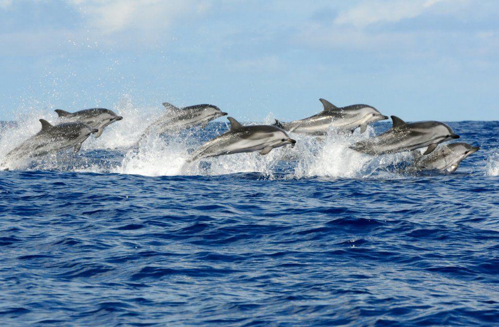 Delfines en la costa rionegrina.