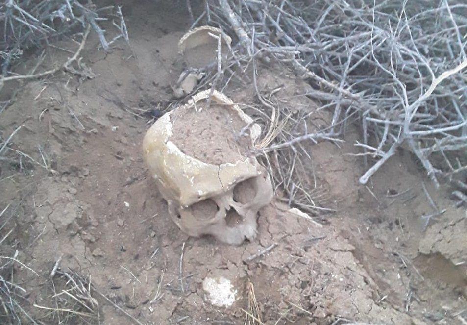 Cráneo encontrado en Santa Cruz.