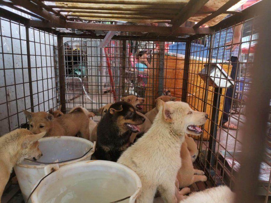 Perros China.